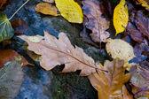 Nassen herbst leafage — Stockfoto