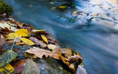 Autumn leafs near quick mountain stream — Stock Photo