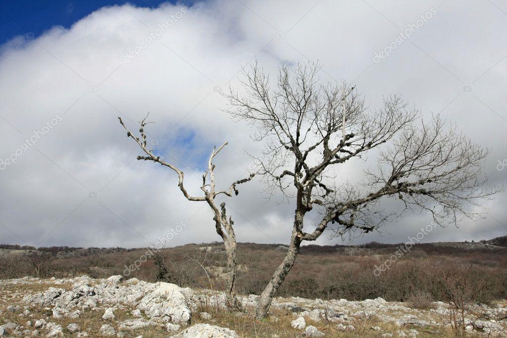 Arbre sans feuilles en montagnes photographie pklimenko - Arbres sans feuilles ...