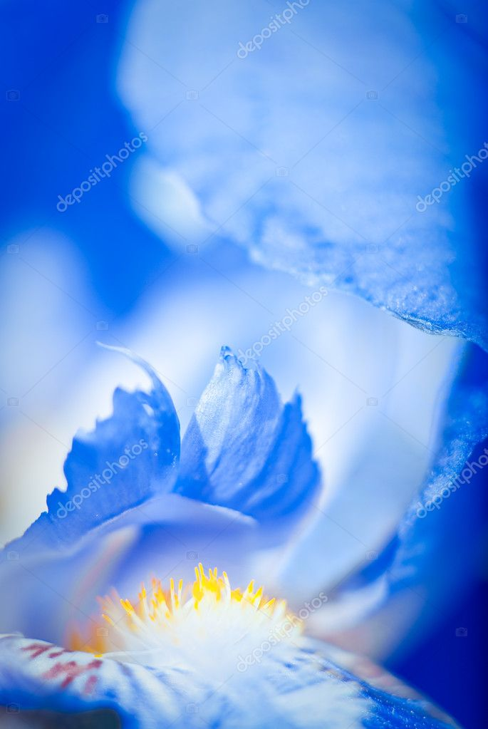 Macro image of a blue iris — Foto Stock #2469868
