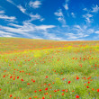 Stock Photo: Meadow with poppies
