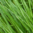 Dew drops on a green grass — Stock Photo