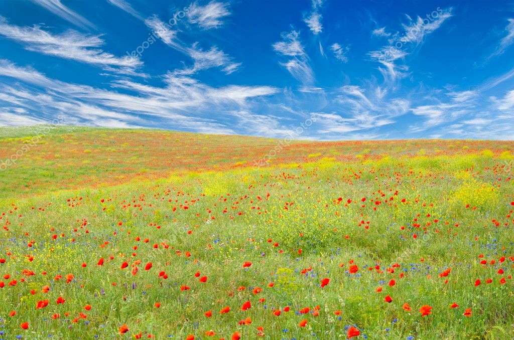 Meadow with poppies, cornflowers and other yellow flowers with fleecy clouds above it — Stock Photo #2610651