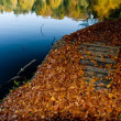 Stock Photo: Autumn carpet made of orange leaves