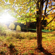 The sun shines through tree foliage — Stock Photo