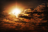 Birds against clouds and the sun — Stock Photo