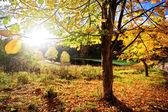 The sun shines through tree foliage — Stock Photo