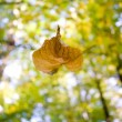 A falling leaf in autumn — Stock Photo