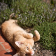 Stock Photo: Cat laying in garden