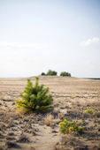 Small bush in the desert — Stock Photo