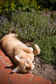 Cat laying in garden — Stock Photo