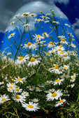 Blumenschmuck — Stockfoto