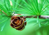 Small Pine Cone — Stock Photo
