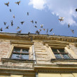 Stock Photo: Doves flying