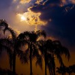 Palm trees against sun — Stock Photo