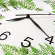 Stock Photo: Wall Clock and Fern Leaves