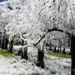 Frost irrigation 1 — Stockfoto