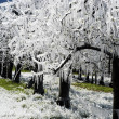 Stock Photo: Frost irrigation 1