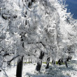 Stock Photo: Frost irrigation 2