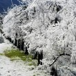 Stock Photo: Frost irrigation 3
