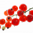 Stock Photo: Redcurrant 01