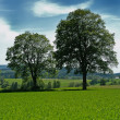 Summer idyll — Stockfoto
