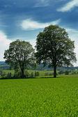 夏の田園風景 — ストック写真