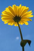 Sunshine 01 — Stockfoto