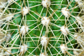 Cactus 1 — Stock Photo