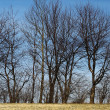 Stock Photo: Trees 1