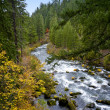 Scenic Rogue River - Oregon — Stock Photo #2474688