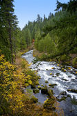 Scenic Rogue River - Oregon — Stock Photo