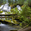 Clearwater Falls - UmpquScenic Byway — Stock Photo #2552783