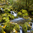 Flowing Water Mountain Stream — Stock Photo #2552984