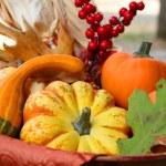 Thanksgiving Harvest Basket — Stock Photo