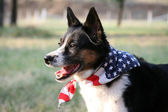 American Pride - Dog with Flag — Stock Photo