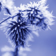 Frost Ice Crystals on Thistle Weed — 图库照片