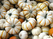 White Mini Pumpkin Gourds — Stock Photo
