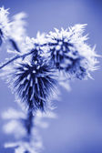Frost Ice Crystals on Thistle Weed — Stockfoto