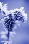 Cristales de hielo escarcha sobre hierba cardo — Foto de Stock