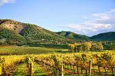 Podzimní vinice — Stock fotografie