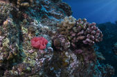 Nudibranch Eggs — Stock Photo