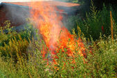 Fire in green grass — Stock Photo