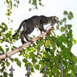 Gray cats on thin cut birch branch — Stock Photo