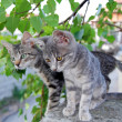 Two gray cats over green leaves - Stock Photo