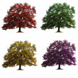 Four oak trees isolated — Stock Photo