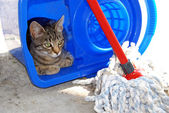 Gray cat resting in blue bucket — Stock Photo