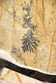Conception fossile — Photo