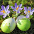 Easter Eggs2 — Stock Photo #2518496