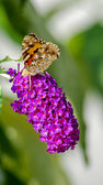 Butterfly1 — Stock Photo